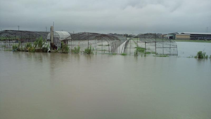 湛水被害の発生の写真