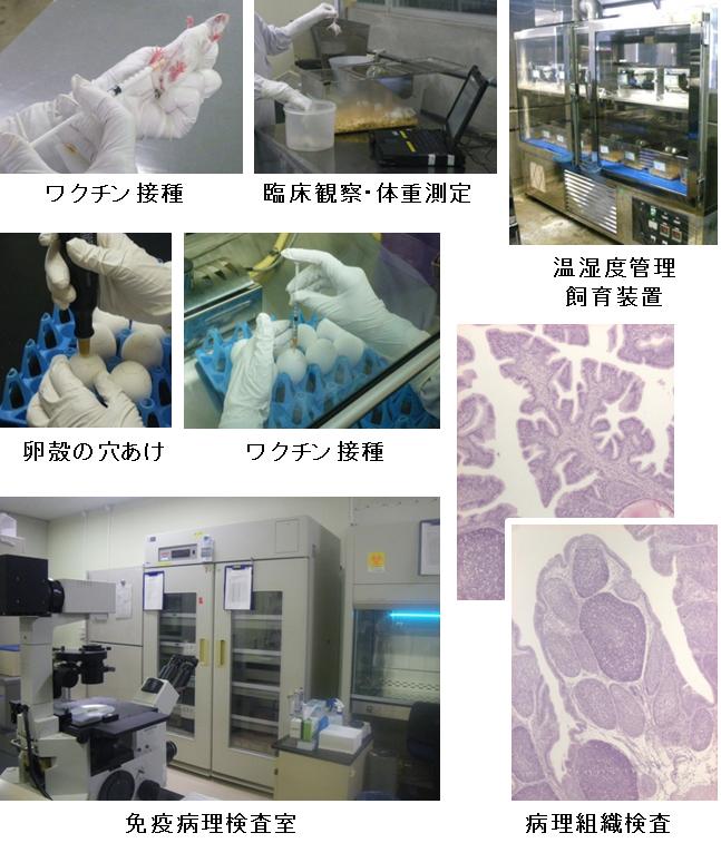 免疫病理学的検査領域の写真