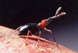 insect-arimodo.jpg