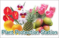 Plant Protection Station