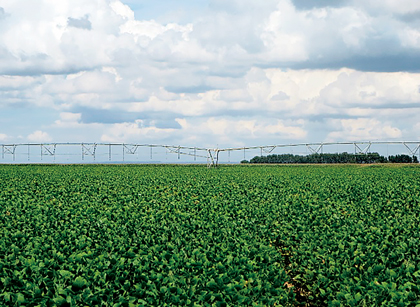A soy field and center pivot irrigation in Brazil