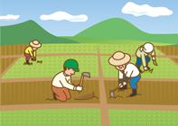農業分野における障害者就労