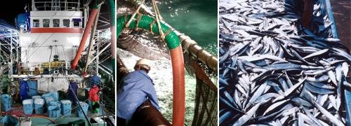 左【漁の様子】中【水あげ作業】右【水あげされたさんま】