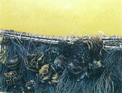 めかぶから出る遊走子を種糸に付着させる