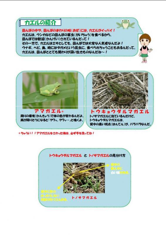 カエルの紹介
