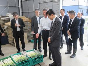 震災後に組織された農業法人におけるネギ出荷作業の現地調査