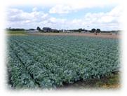 野菜画像1