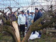鹿野農林水産大臣の今冬の大雪等による農業関係被害状況の視察