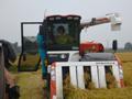 収穫作業を行うあべ農林水産副大臣