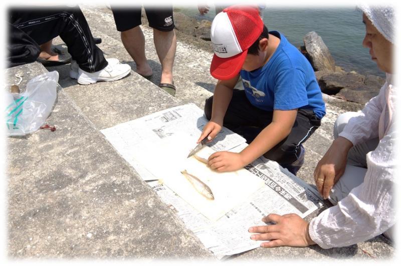 篠島お魚の学校