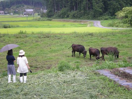 耕作放棄地を活用した牛の放牧