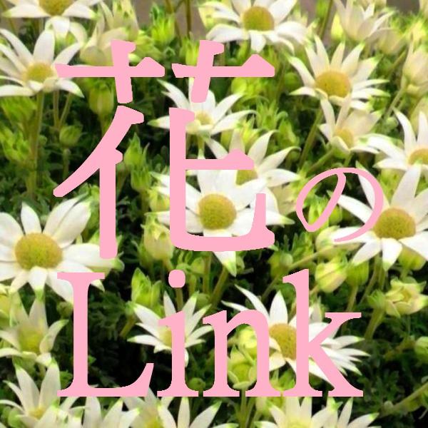 花のリンク集