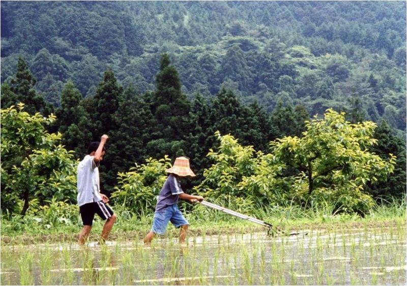 有機栽培圃場(愛知県新城市)
