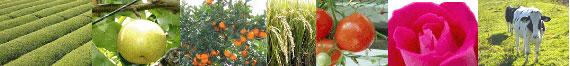 強い農業づくり交付金&技術革新波及対策事業